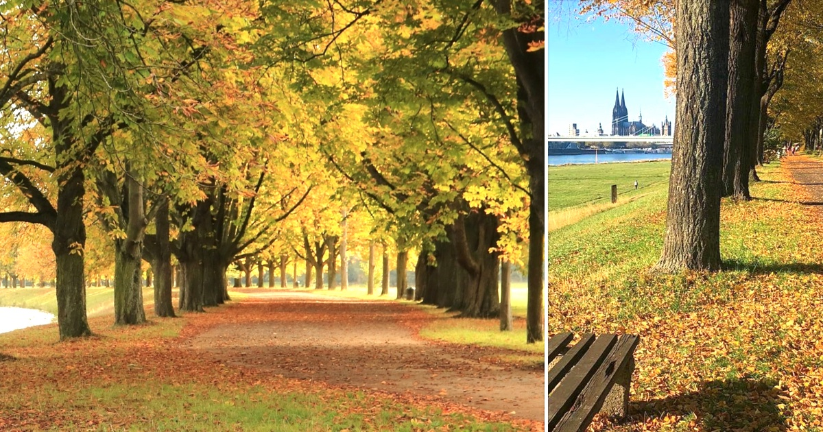 Köln im Herbst